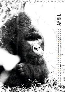 Berggorillas 2016 (Wandkalender 2016 DIN A4 hoch)