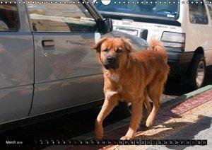 STREET DOGS / UK-Version (Wall Calendar 2015 DIN A3 Landscape)