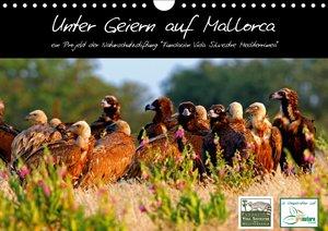 Unter Geiern auf Mallorca: Ein Projekt der Naturschutzstiftung V