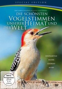 Die Schönsten Vogelstimmen Unserer Heimat Und Welt
