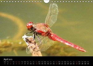 Dragonflies of South-East Asia (Wall Calendar 2015 DIN A4 Landsc
