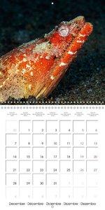 UNDERWATER CREATURES (Wall Calendar 2015 300 × 300 mm Square)