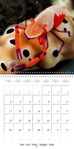 UNDERWATER CREATURES (Wall Calendar 2015 300 × 300 mm Square)