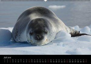 Die Antarktis (Wandkalender 2016 DIN A2 quer)
