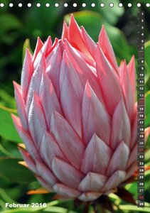 Wilde Flora - Hawaii (Tischkalender 2016 DIN A5 hoch)