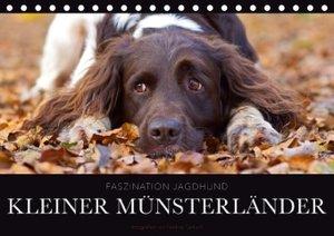 Faszination Jagdhund - Kleiner Münsterländer (Tischkalender 2017