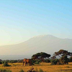 Elephant Families 2018 What a Wonderful World