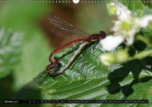 Dragonflies in Hamburg (Wall Calendar 2015 DIN A3 Landscape)