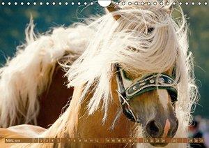 Haflinger: Die blonden Pferde von der Alm (Wandkalender 2016 DIN