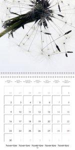 Intricate Dandelions (Wall Calendar 2015 300 × 300 mm Square)