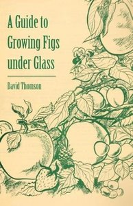 A Guide to Growing Figs Under Glass