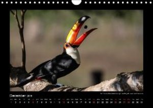 Bergwitz, U: Wildlife Pantanal 2015 / UK-Version