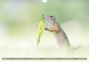 Kleine Blumenfreunde - Herzige Europäische Ziesel