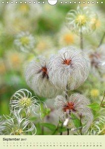 Blumenglück. Ein blühendes Gartenjahr