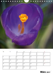 Zauberhafte Blütenwelt / Planer