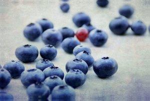 Premium Textil-Leinwand 120 cm x 80 cm quer Blaubeeren Fine Art