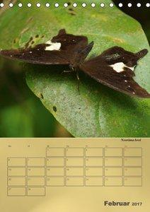 Zarte Schönheiten - Schmetterlinge der Malaiischen Halbinsel / P
