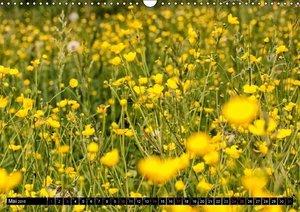 Tappeiner, K: Frühlingserwachen (Wandkalender 2015 DIN A3 qu