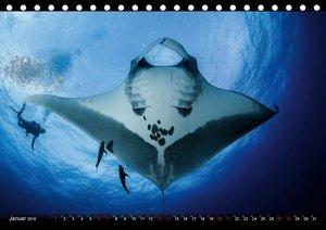Unterwasser-Aufnahmen aus Socorro-Mexico (Tischkalender 2018 DIN