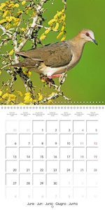 Doves Gentle Beauty (Wall Calendar 2016 300 × 300 mm Square)