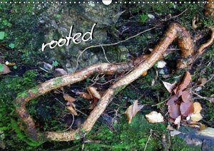 Rooted / UK Version
