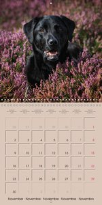 Labrador Retriever - Dogs with Personality (Wall Calendar 2015 3