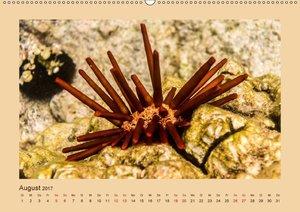 Unterwasserwelt Hawaii (Wandkalender 2017 DIN A2 quer)