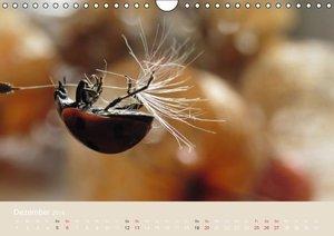Doberstein, J: Kleine Glückskäfer (Wandkalender 2015 DIN A4
