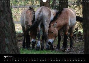 Przewalskipferde (Wandkalender 2016 DIN A3 quer)