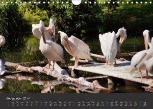 Beautiful Wildlife / UK-Version (Wall Calendar 2015 DIN A4 Land