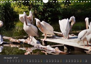 Beautiful Wildlife / UK-Version (Wall Calendar 2015 DIN A4 Land