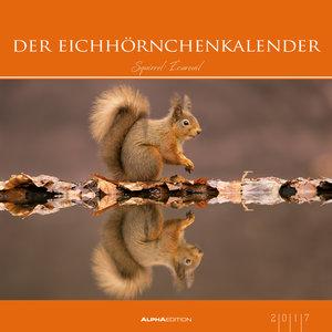 Der Eichhörnchenkalender 2017 - Bildkalender