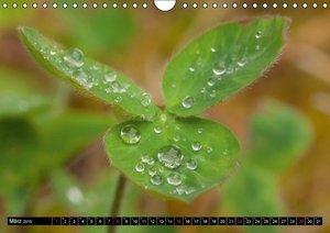 Tappeiner, K: Frühlingserwachen (Wandkalender 2015 DIN A4 qu