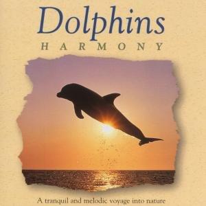 Dolphins Harmony