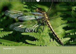 Faszinierende Insektenwelt (Wandkalender 2016 DIN A3 quer)