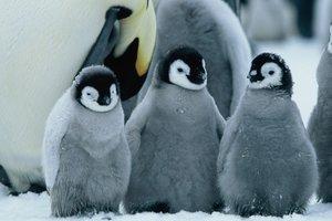 Die Reise der Pinguine