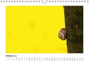 Die Welt der kleinen Tiere (Wandkalender 2016 DIN A4 quer)