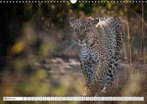 Emotional Moments: Leopards UK Version (Wall Calendar 2015 DIN A