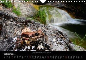 Frogs / UK-Version (Wall Calendar 2015 DIN A4 Landscape)