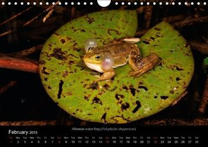 Frogs / UK-Version (Wall Calendar 2015 DIN A4 Landscape)