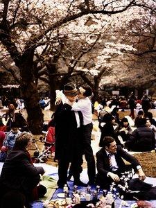 Kirschblüten-Hanami