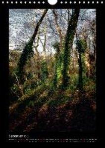 Forest Moods (Wall Calendar 2015 DIN A4 Portrait)