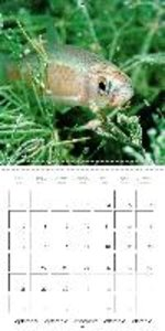 Fish: In ponds and rivers (Wall Calendar 2015 300 × 300 mm Squar
