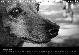 A dog´s life / UK Version (Wall Calendar 2015 DIN A4 Landscape)
