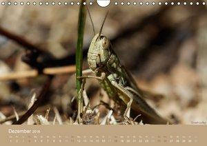 Faszinierende Insektenwelt (Wandkalender 2016 DIN A4 quer)