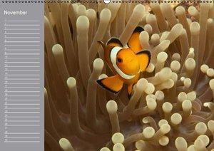 Clownfisch Geburtstagskalender (Wandkalender immerwährend DIN A2