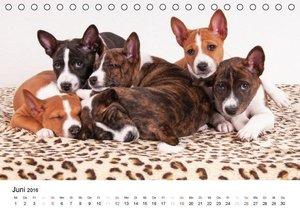 Bezaubernde Basenji-Welpen (Tischkalender 2016 DIN A5 quer)