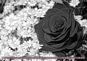 Rosen Melancholie in Schwarz und Weiß 2017 (Wandkalender 2017 DI