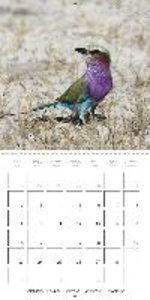 Birds of Africa - The Magic of Colours (Wall Calendar 2015 300 ×