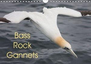Bass Rock Gannets (Wall Calendar 2015 DIN A4 Landscape)